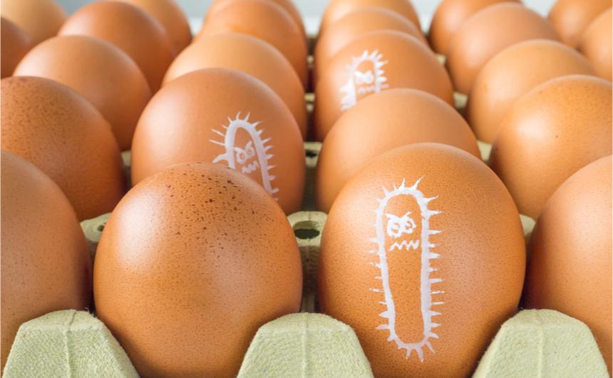 Yumurtalarda Salmonella Şüphesi